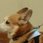 Inupathy(犬パシー)は人と犬の絆を深める道具なのだ! ねこ好きが犬パシーを見てわかったこと。#プレカン