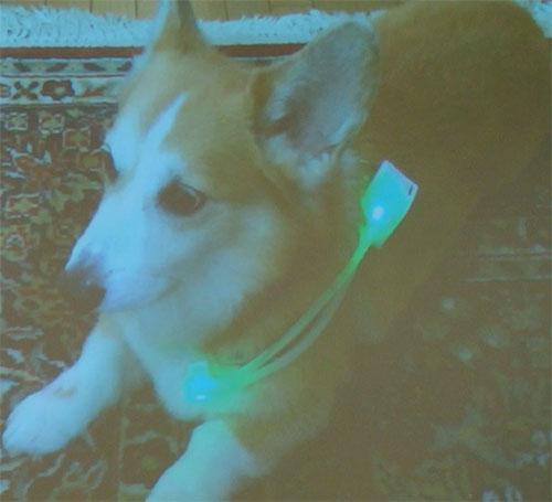 犬パシーinupathy