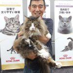 ロイヤルカナンのねこのフードセミナーに行ってきた!猫種ごとに最適なフードを勉強するのだ!