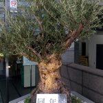 今年の敬老の日は9月19日(月・祝)。日比谷花壇の『敬老の日』ギフト展示会に行ってきた!